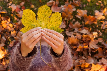 autumn leaf woman's hands background