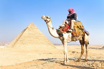 Camel at Giza pyramides, Cairo, Egypt.