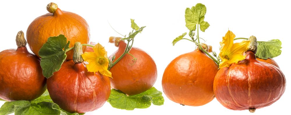 Přírodou proti diabetu: Cukr v krvi pomohou snížit houby, dýně nebo gymnéma lesní