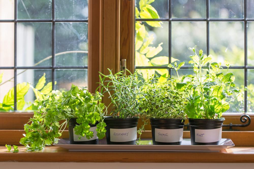 Léčivé bylinky v květináči